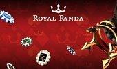 Royal Panda cover