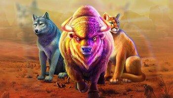 Buffalo King™ cover